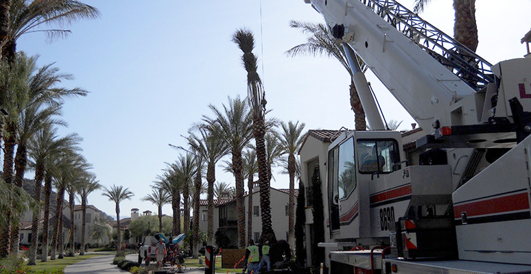 Landscaping and Tree Setting Services in Palm Springs, Palm Desert, California